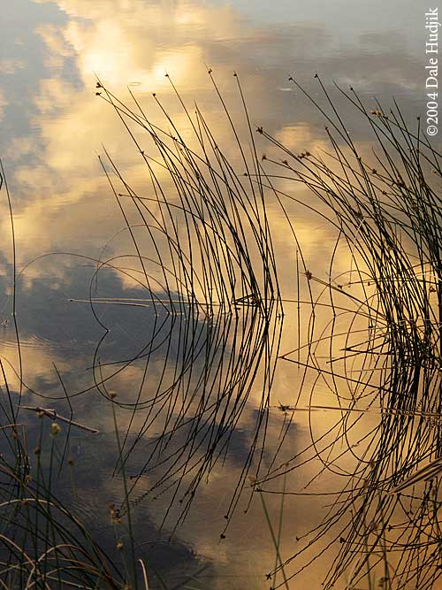 Reed Reflexions