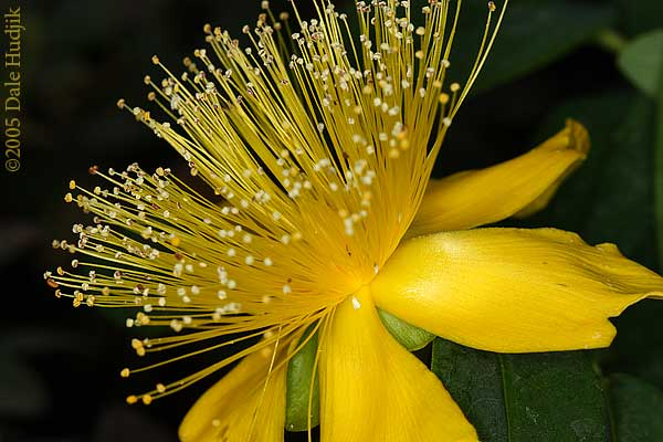 Exotic Yellow Flower