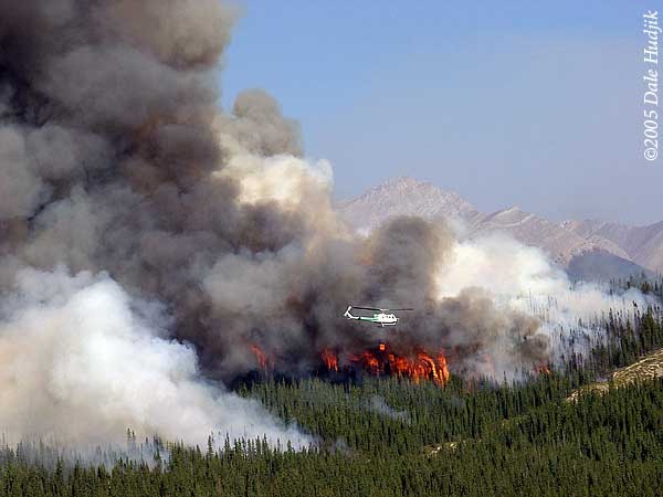 Helicopter Fighting Forest Fire